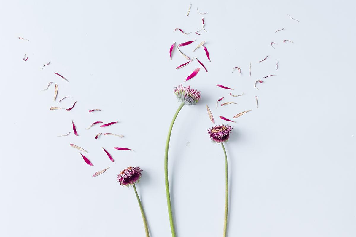 flower3(2)