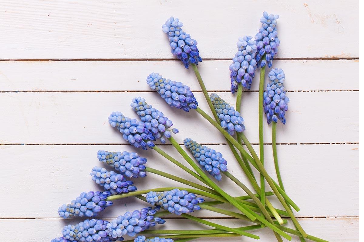 flower4(2)
